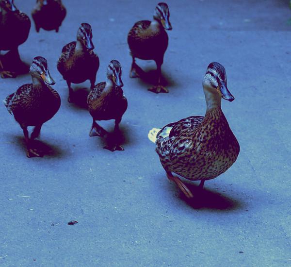 Naturalmente leader: essere autorevoli per essere leader